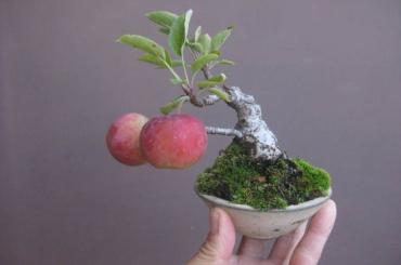 Thế giới Mame Bonsai (Bonsai siêu mini) Phần 2