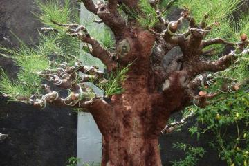 Cách nuôi cây của Đài Loan