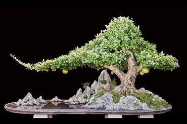 Cây đào tiên Bonsai