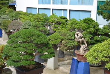 Vườn cây cảnh Vạn Niên Tùng