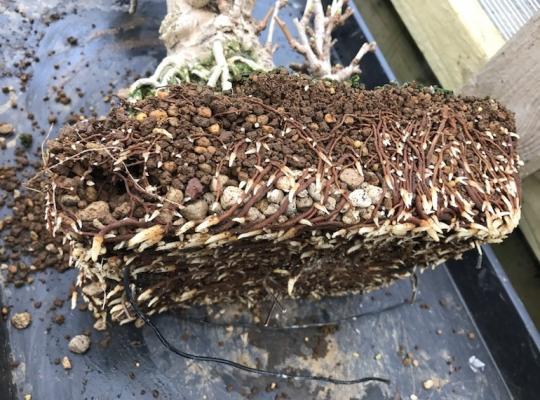 Đá bọt trồng Bonsai Pumice 3-5mm