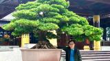 Tin nóng: Tùng la hán Đài Loan khủng về Hải ...