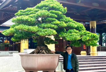Tin nóng: Tùng la hán Đài Loan khủng về Hải Phòng