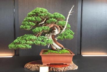 Tuyển tập những tác phẩm đẹp (Hwa Fong Bonsai exhibition 2017) Phần 1